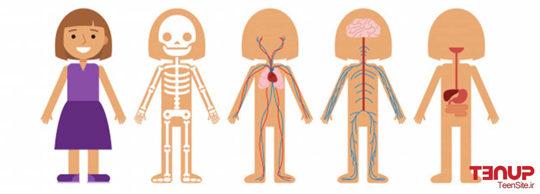 گرایش جنسی افراد و اطلاعات درباره اندام جنسی به زبان ساده